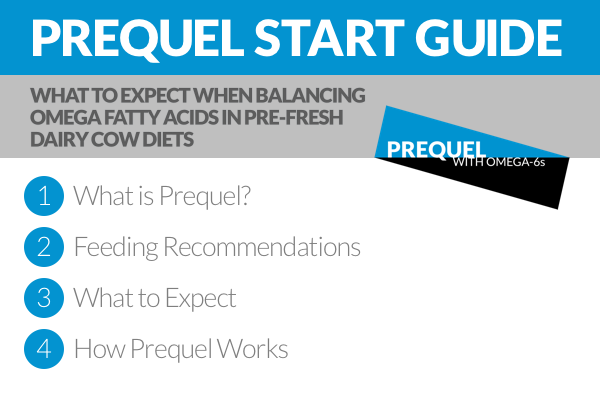 Prequel is the best way to add more of the essential omega-6s into your pre-fresh diet to improve transition performance and early conception rates. Check out this simple start guide to see how to get a smooth start with Prequel.