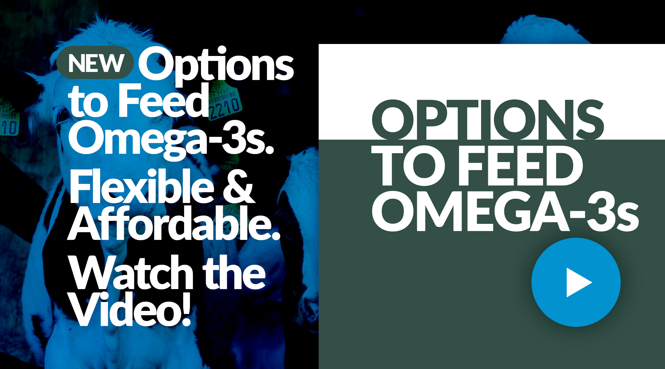 Options to Feed Omega-3s