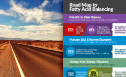 feature-roadmap